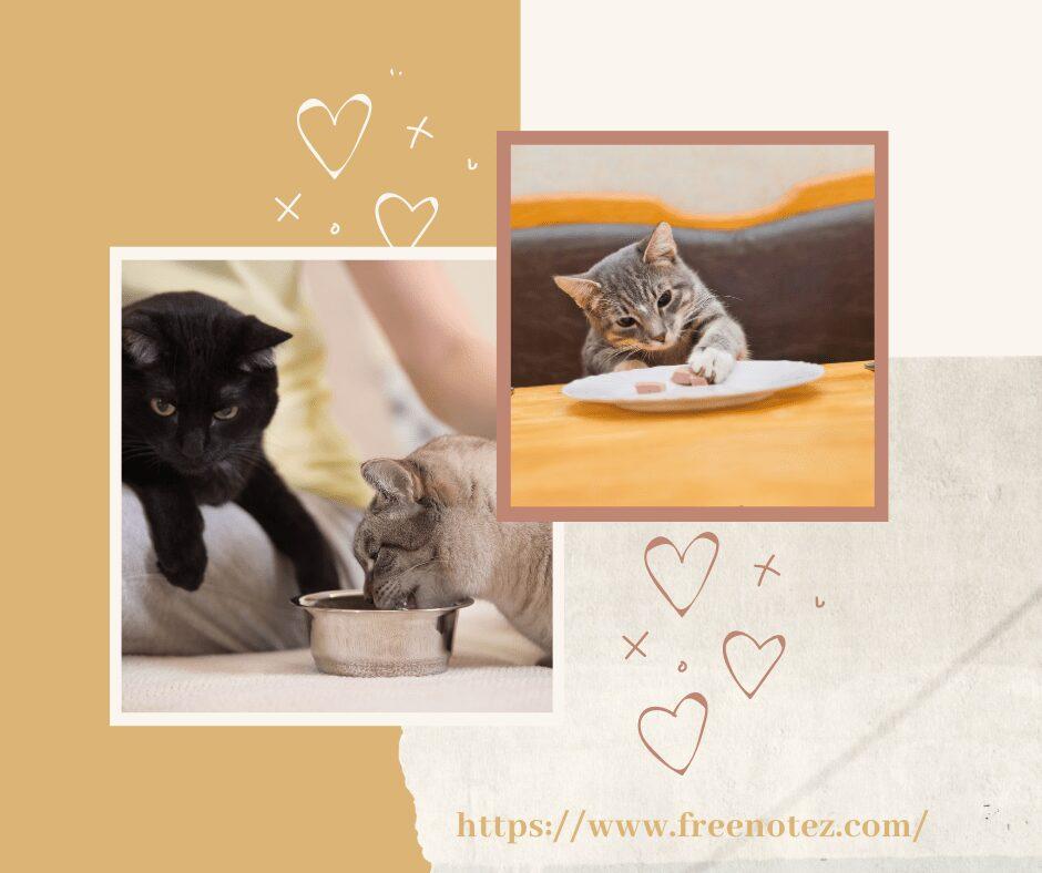 cats as a pet feeding cats on freenotez